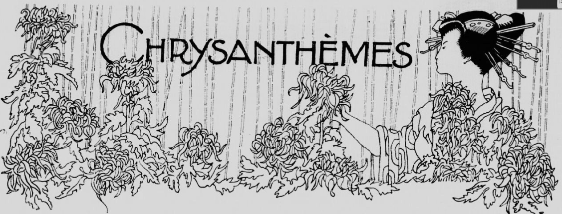 chrysanthèmes au japon
