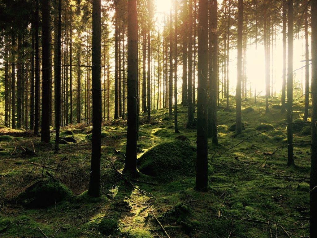 forêts cinéraires